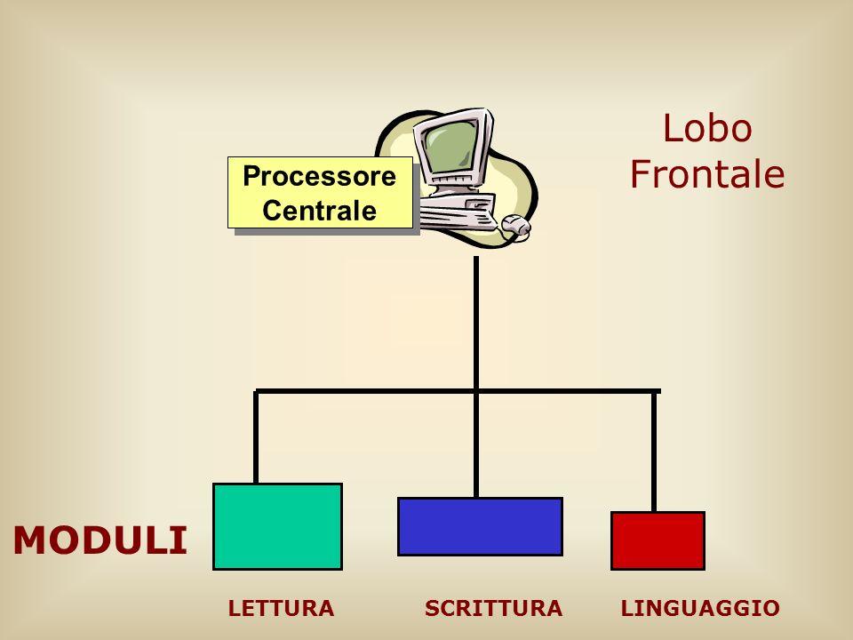 Processore Centrale MODULI LETTURALINGUAGGIOSCRITTURA Lobo Frontale