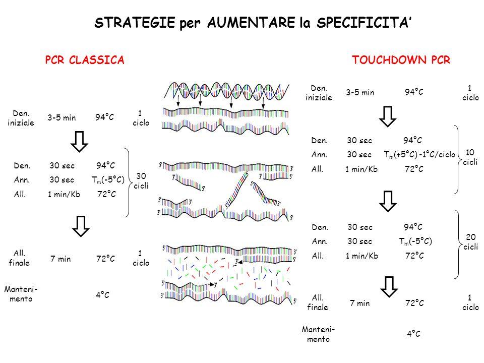 STRATEGIE per AUMENTARE la SPECIFICITA TOUCHDOWN PCR Den. 30 sec 94°C Ann. 30 sec T m (+5°C) -1°C/ciclo All. 1 min/Kb 72°C 10 cicli Den. 30 sec 94°C A