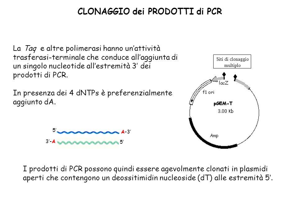 T T r CLONAGGIO dei PRODOTTI di PCR La Taq e altre polimerasi hanno unattività trasferasi-terminale che conduce allaggiunta di un singolo nucleotide allestremità 3 dei prodotti di PCR.