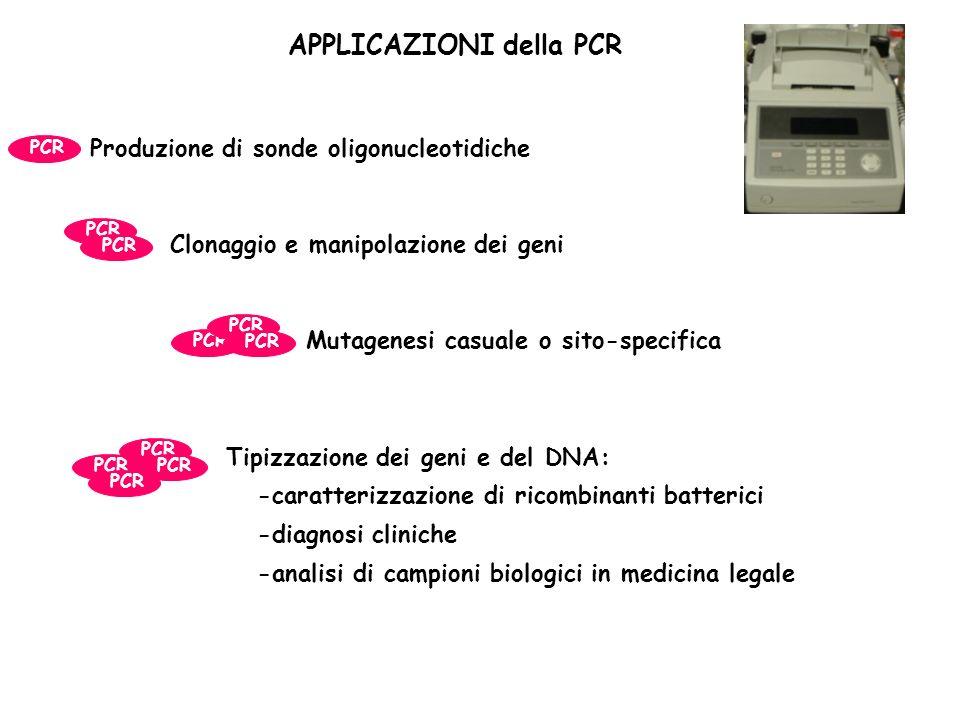 APPLICAZIONI della PCR Produzione di sonde oligonucleotidiche PCR Clonaggio e manipolazione dei geni PCR Tipizzazione dei geni e del DNA: -caratterizzazione di ricombinanti batterici -diagnosi cliniche -analisi di campioni biologici in medicina legale PCR Mutagenesi casuale o sito-specifica PCR