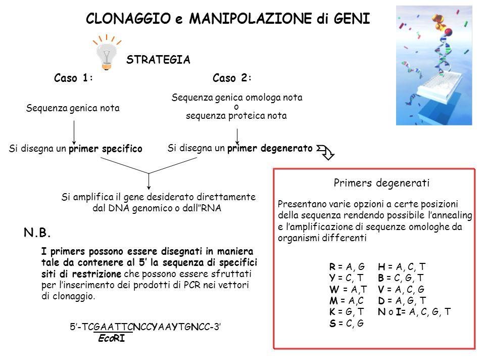 CLONAGGIO e MANIPOLAZIONE di GENI STRATEGIA Presentano varie opzioni a certe posizioni della sequenza rendendo possibile lannealing e lamplificazione