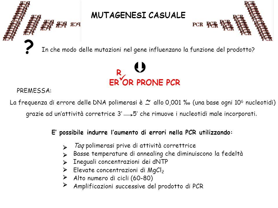 MUTAGENESI CASUALE In che modo delle mutazioni nel gene influenzano la funzione del prodotto? ? ER OR PRONE PCR R PREMESSA: La frequenza di errore del