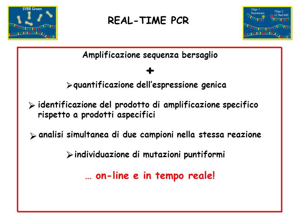Amplificazione sequenza bersaglio + quantificazione dellespressione genica identificazione del prodotto di amplificazione specifico rispetto a prodotti aspecifici analisi simultanea di due campioni nella stessa reazione individuazione di mutazioni puntiformi … on-line e in tempo reale.