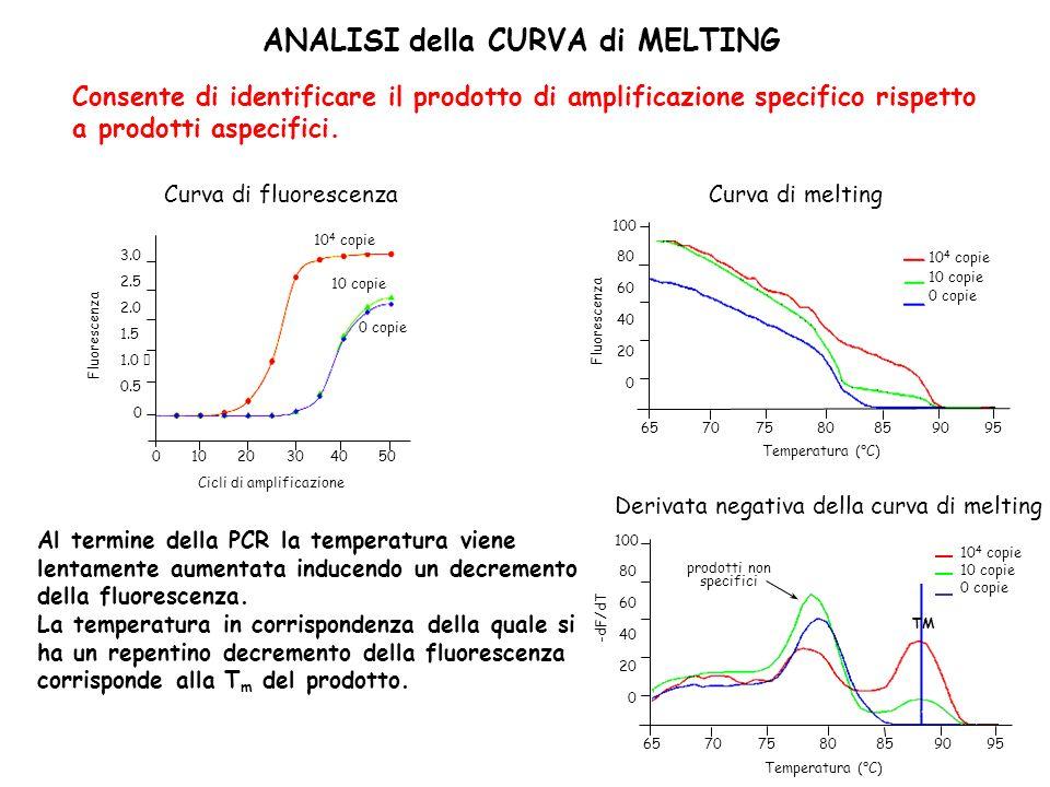 ANALISI della CURVA di MELTING Consente di identificare il prodotto di amplificazione specifico rispetto a prodotti aspecifici. Al termine della PCR l