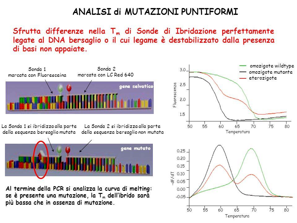 ANALISI di MUTAZIONI PUNTIFORMI Sfrutta differenze nella T m di Sonde di Ibridazione perfettamente legate al DNA bersaglio o il cui legame è destabilizzato dalla presenza di basi non appaiate.