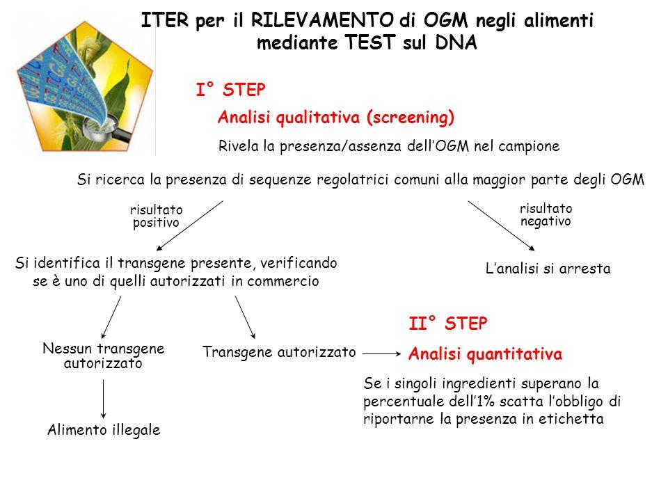 Analisi qualitativa (screening) I° STEP Rivela la presenza/assenza dellOGM nel campione Si ricerca la presenza di sequenze regolatrici comuni alla mag