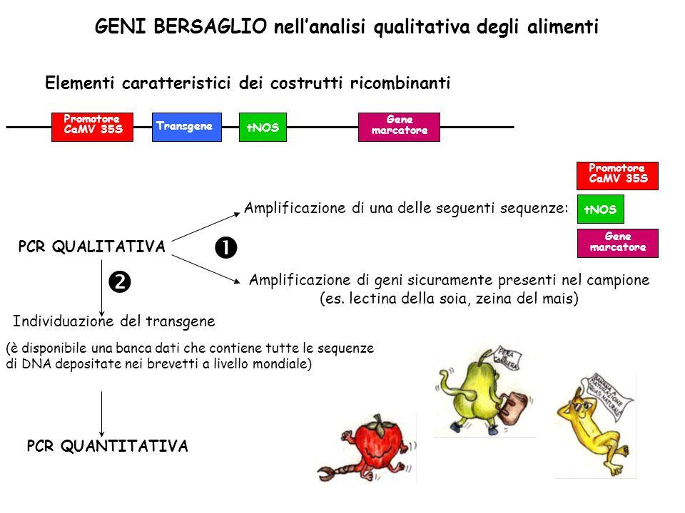 GENI BERSAGLIO nellanalisi qualitativa degli alimenti Individuazione del transgene Elementi caratteristici dei costrutti ricombinanti Promotore CaMV 3