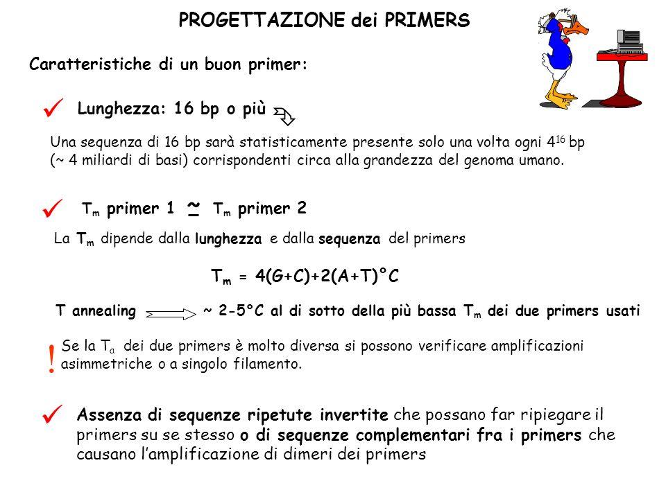 PROGETTAZIONE dei PRIMERS Caratteristiche di un buon primer: Una sequenza di 16 bp sarà statisticamente presente solo una volta ogni 4 16 bp (~ 4 mili
