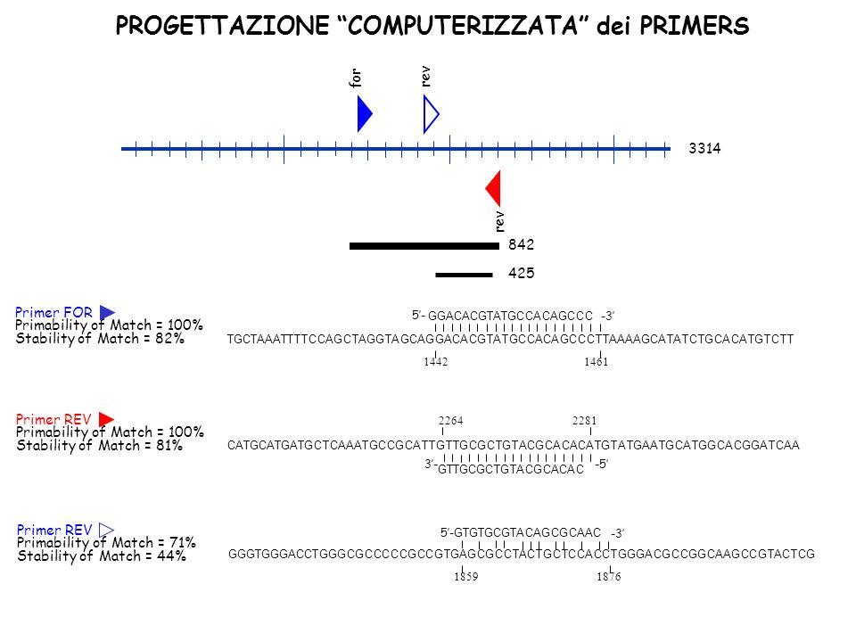 PROGETTAZIONE COMPUTERIZZATA dei PRIMERS rev for 3314 842 425 GTGTGCGTACAGCGCAAC GGGTGGGACCTGGGCGCCCCCGCCGTGAGCGCCTACTGCTCCACCTGGGACGCCGGCAAGCCGTACTCG 1859 1876 5- -3 Primer REV Primability of Match = 71% Stability of Match = 44% Primer REV Primability of Match = 100% Stability of Match = 81% 2264 2281 CATGCATGATGCTCAAATGCCGCATTGTTGCGCTGTACGCACACATGTATGAATGCATGGCACGGATCAA GTTGCGCTGTACGCACAC -53- GGACACGTATGCCACAGCCC TGCTAAATTTTCCAGCTAGGTAGCAGGACACGTATGCCACAGCCCTTAAAAGCATATCTGCACATGTCTT 1442 1461 5- -3 Primer FOR Primability of Match = 100% Stability of Match = 82%