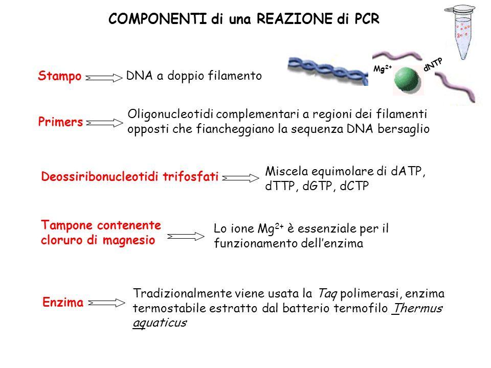 COMPONENTI di una REAZIONE di PCR Stampo DNA a doppio filamento Deossiribonucleotidi trifosfati Miscela equimolare di dATP, dTTP, dGTP, dCTP Primers Oligonucleotidi complementari a regioni dei filamenti opposti che fiancheggiano la sequenza DNA bersaglio Tampone contenente cloruro di magnesio Lo ione Mg 2+ è essenziale per il funzionamento dellenzima Enzima Tradizionalmente viene usata la Taq polimerasi, enzima termostabile estratto dal batterio termofilo Thermus aquaticus dNTP Mg 2+