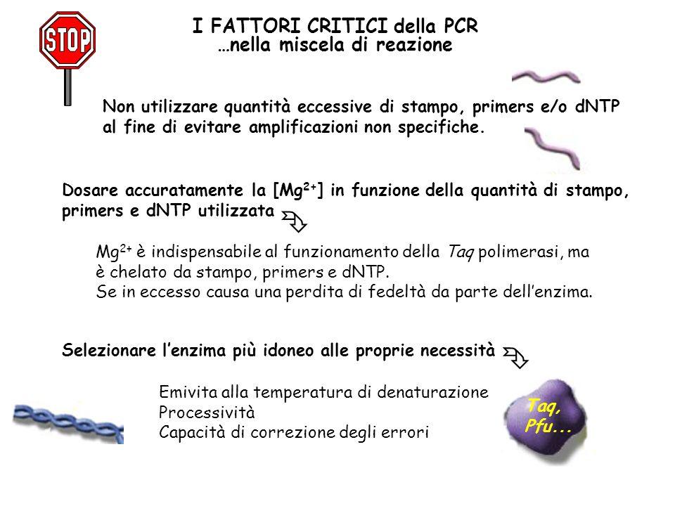 I FATTORI CRITICI della PCR …nella miscela di reazione Non utilizzare quantità eccessive di stampo, primers e/o dNTP al fine di evitare amplificazioni