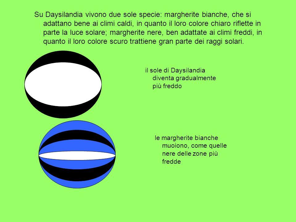 Su Daysilandia vivono due sole specie: margherite bianche, che si adattano bene ai climi caldi, in quanto il loro colore chiaro riflette in parte la l