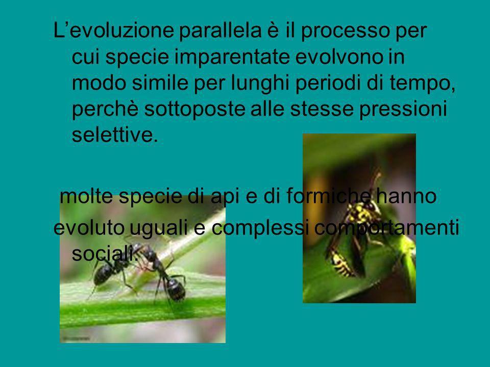 Levoluzione parallela è il processo per cui specie imparentate evolvono in modo simile per lunghi periodi di tempo, perchè sottoposte alle stesse pres