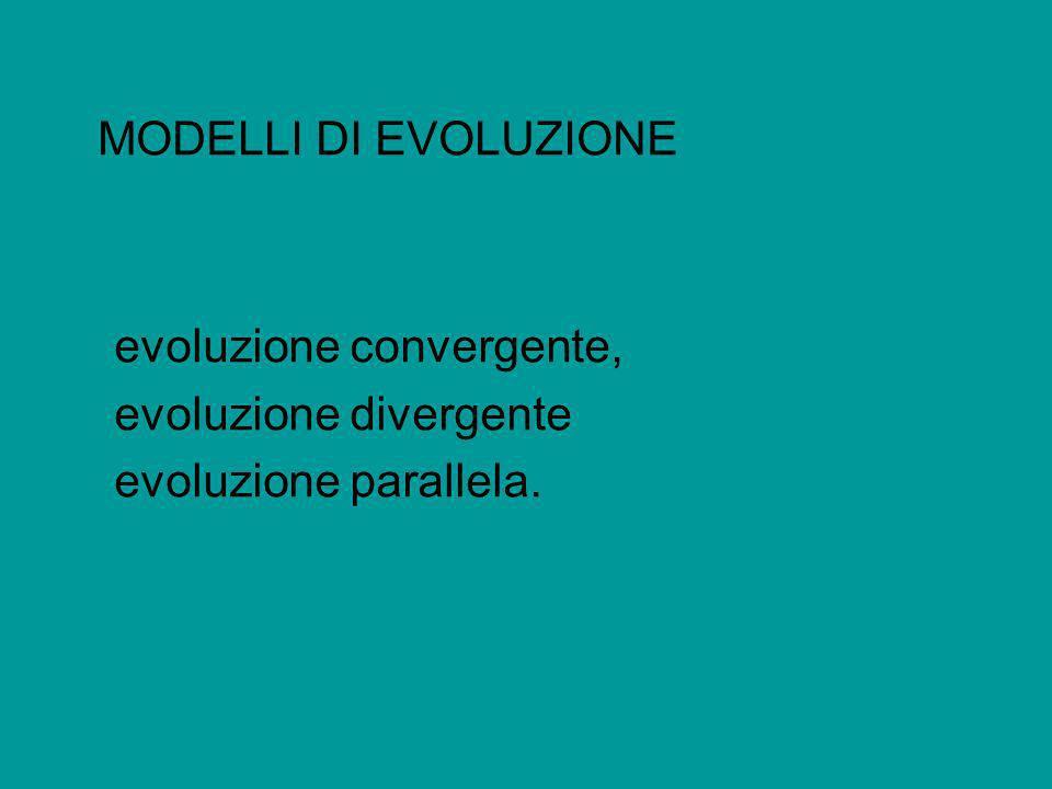 MODELLI DI EVOLUZIONE evoluzione convergente, evoluzione divergente evoluzione parallela.