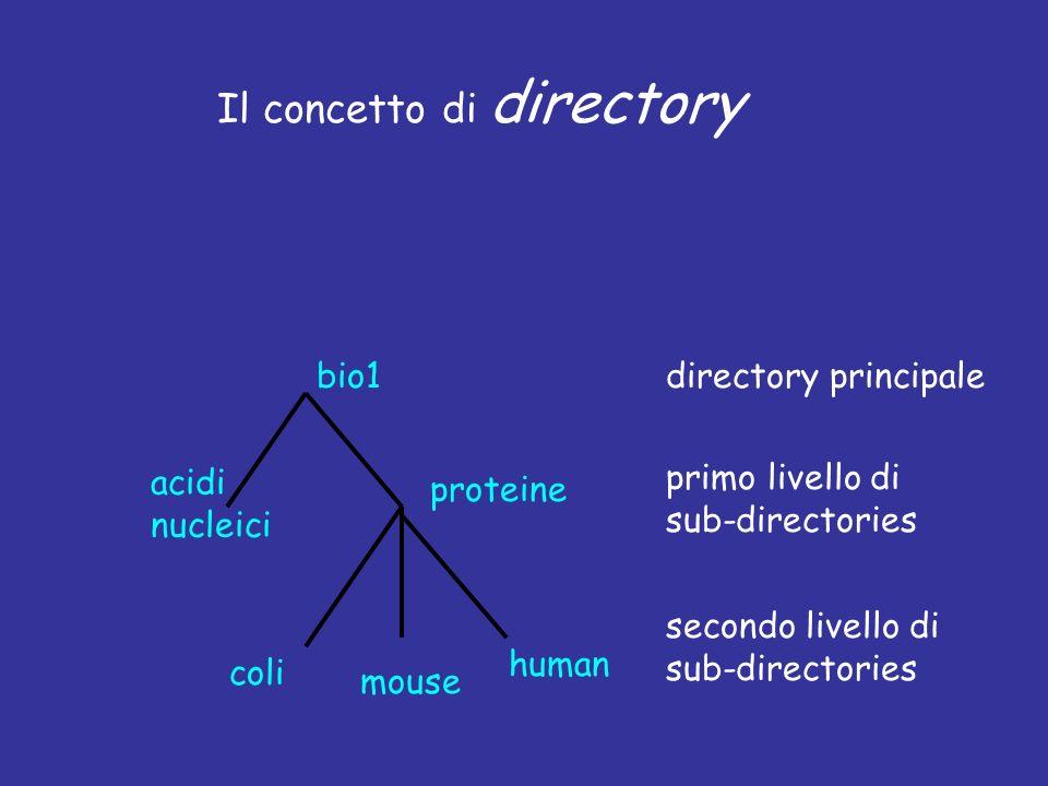 Il concetto di directory directory principale primo livello di sub-directories secondo livello di sub-directories bio1 acidi nucleici proteine coli mouse human