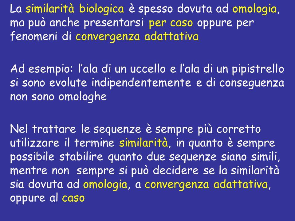 La similarità biologica è spesso dovuta ad omologia, ma può anche presentarsi per caso oppure per fenomeni di convergenza adattativa Ad esempio: lala