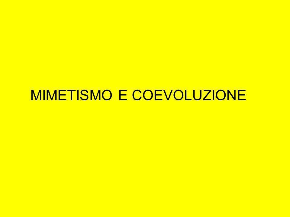 MIMETISMO E COEVOLUZIONE