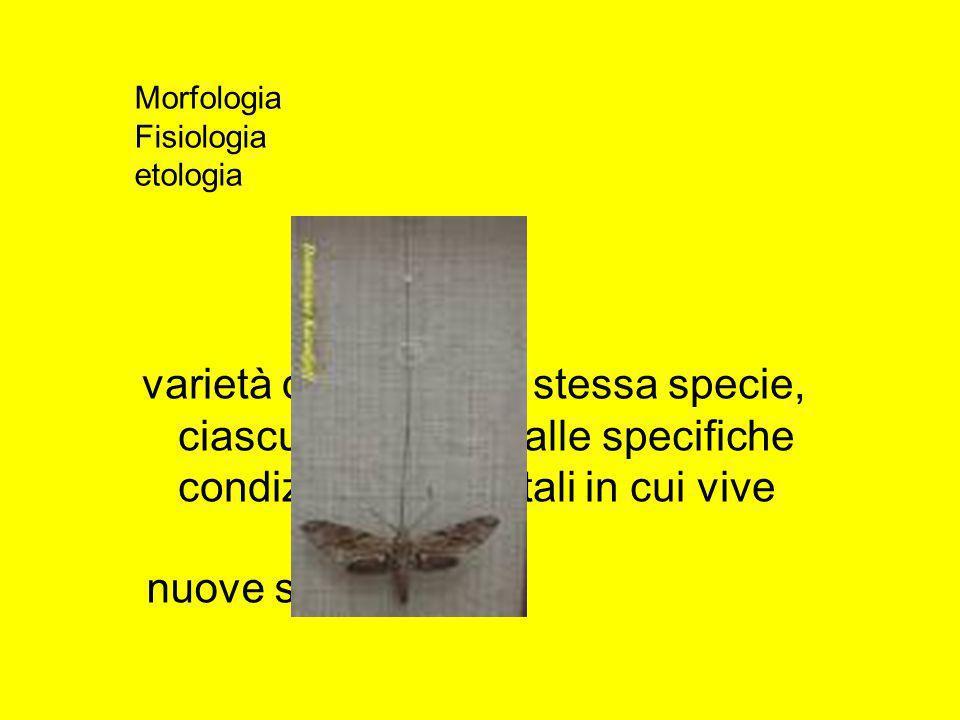 varietà diverse della stessa specie, ciascuna adattata alle specifiche condizioni ambientali in cui vive nuove specie Morfologia Fisiologia etologia
