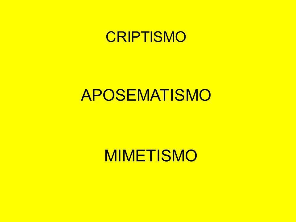 CRIPTISMO MIMETISMO APOSEMATISMO