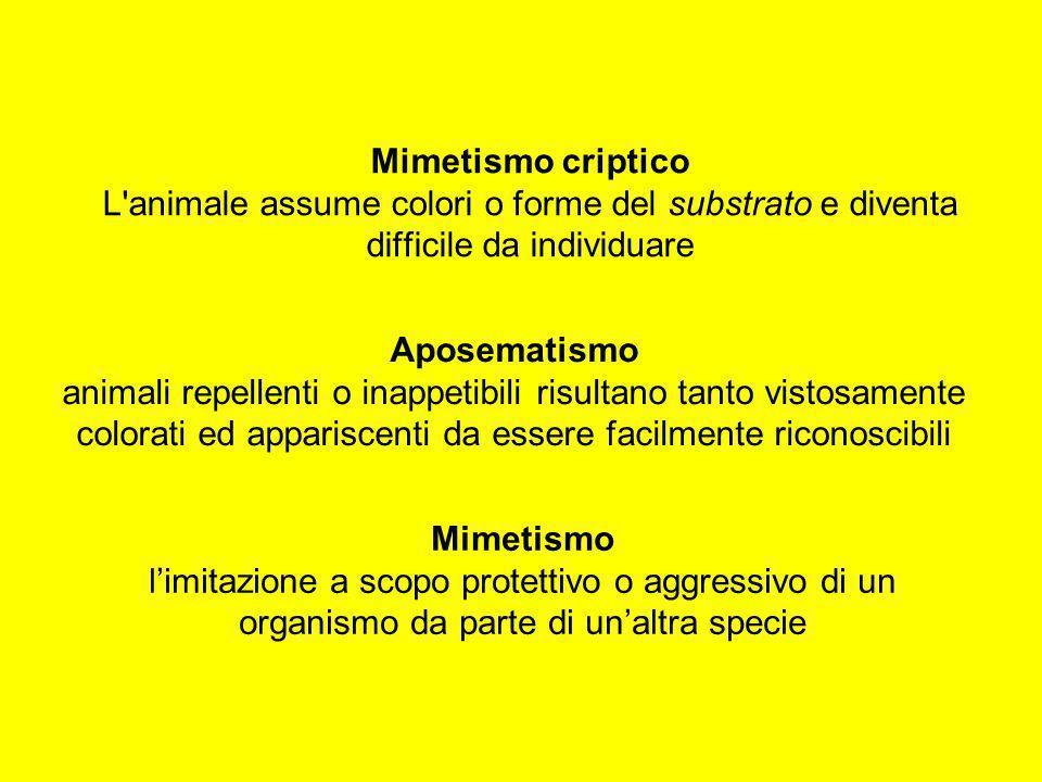 Mimetismo criptico L'animale assume colori o forme del substrato e diventa difficile da individuare Mimetismo limitazione a scopo protettivo o aggress
