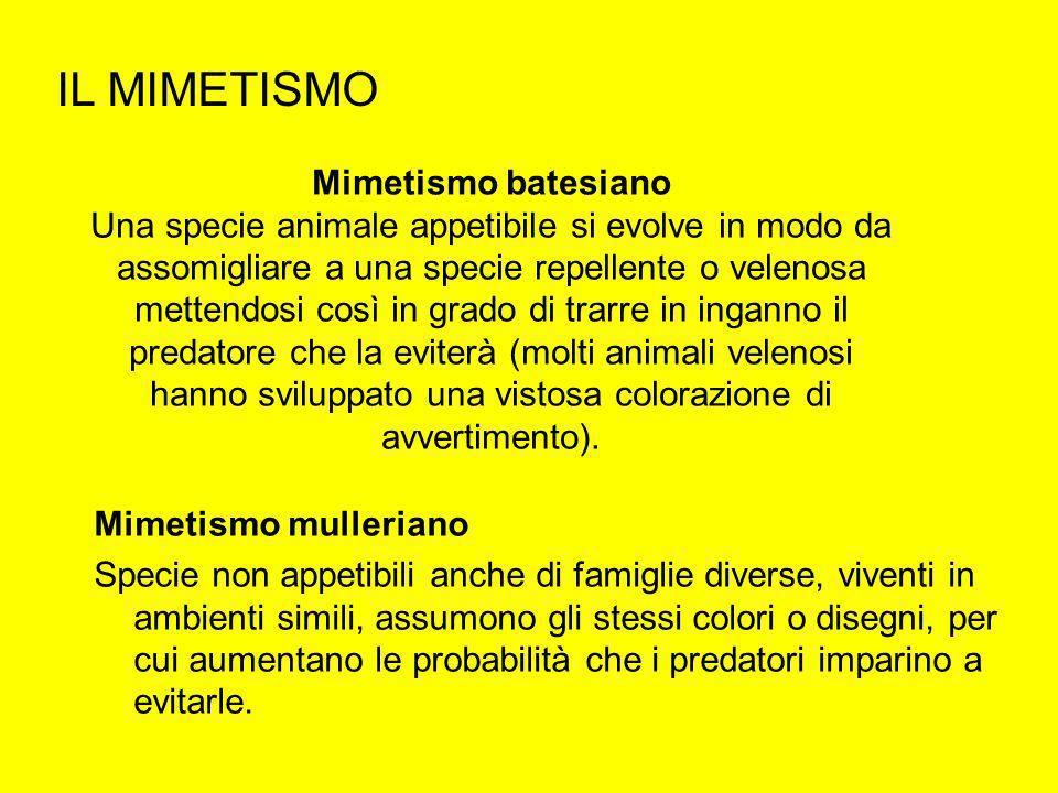 IL MIMETISMO Mimetismo batesiano Una specie animale appetibile si evolve in modo da assomigliare a una specie repellente o velenosa mettendosi così in