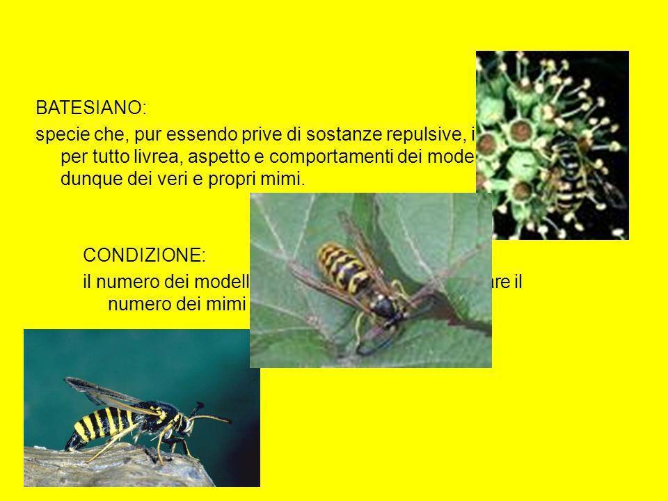 BATESIANO: specie che, pur essendo prive di sostanze repulsive, imitano in tutto e per tutto livrea, aspetto e comportamenti dei modelli protetti. Son