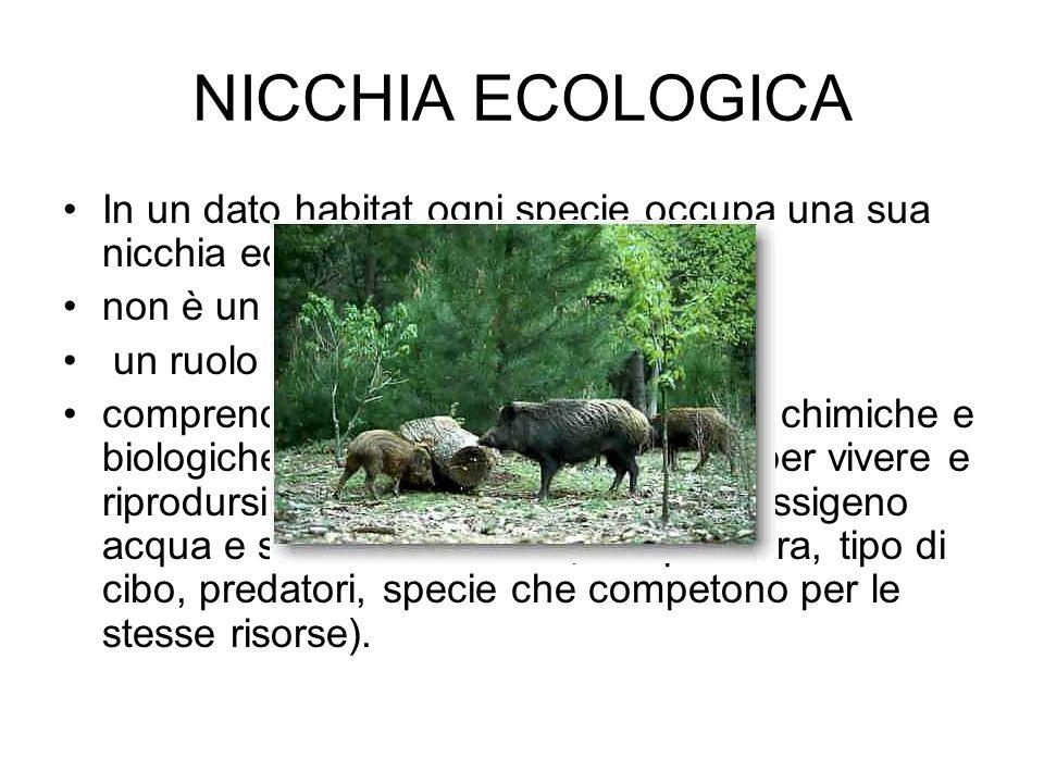 In un dato habitat ogni specie occupa una sua nicchia ecologica, non è un luogo ma un modo di vita, un ruolo comprende tutte le condizioni fisiche, ch