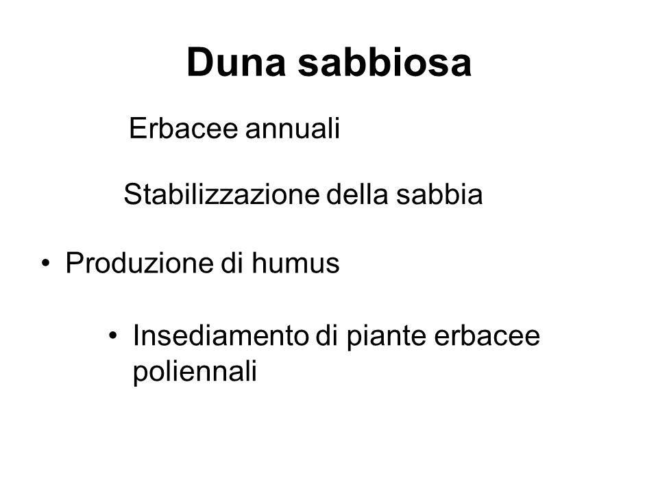 Duna sabbiosa Erbacee annuali Stabilizzazione della sabbia Produzione di humus Insediamento di piante erbacee poliennali