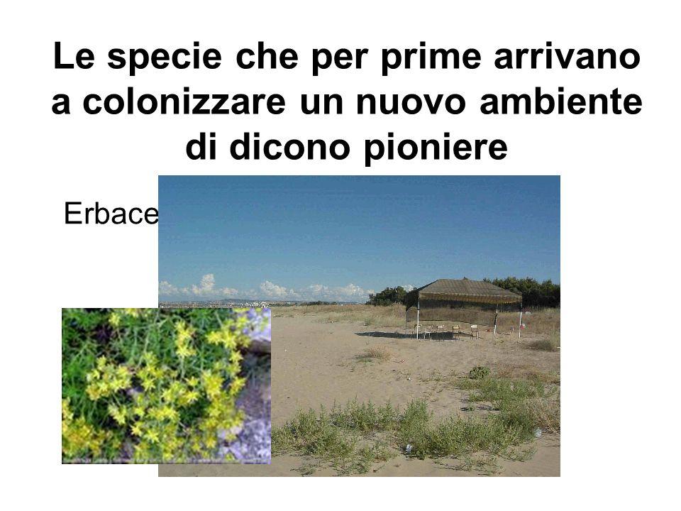 Le specie che per prime arrivano a colonizzare un nuovo ambiente di dicono pioniere Erbacee annuali