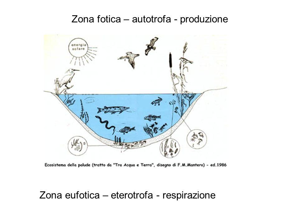 Zona fotica – autotrofa - produzione Zona eufotica – eterotrofa - respirazione