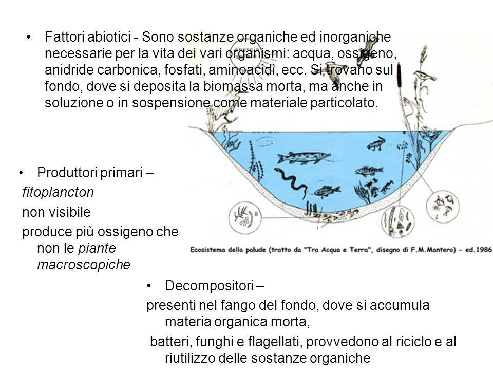 Produttori primari – fitoplancton non visibile produce più ossigeno che non le piante macroscopiche Decompositori – presenti nel fango del fondo, dove