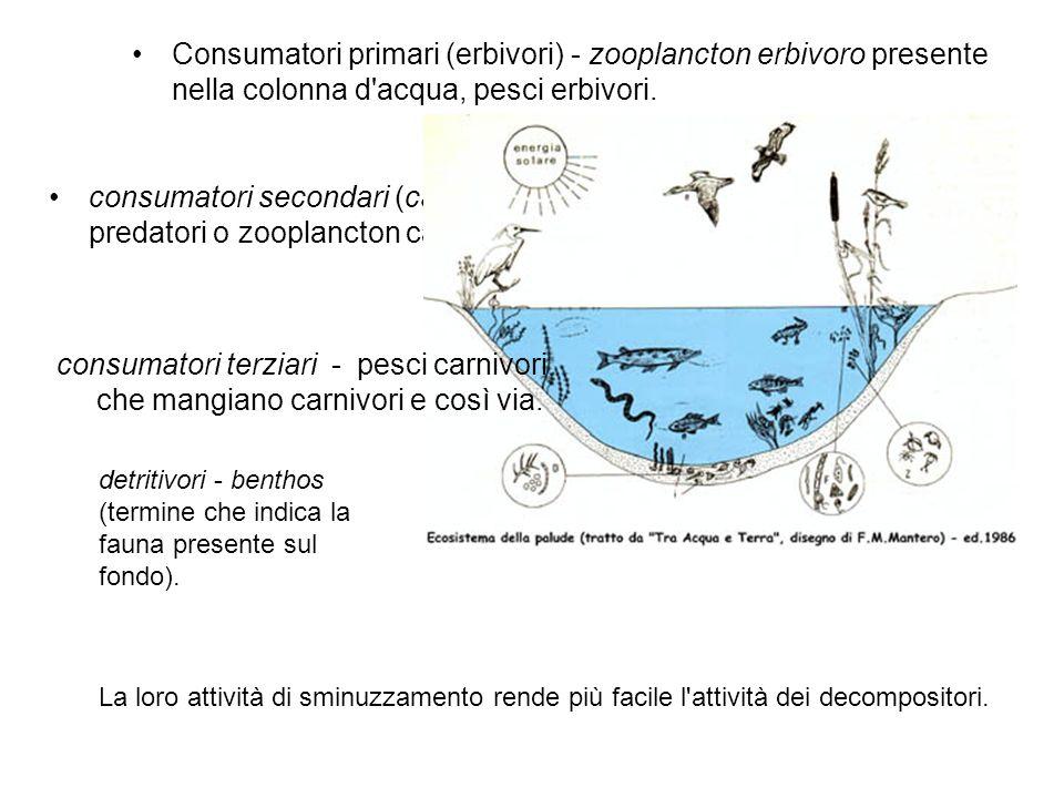 Consumatori primari (erbivori) - zooplancton erbivoro presente nella colonna d'acqua, pesci erbivori. consumatori secondari (carnivori) - insetti o pe
