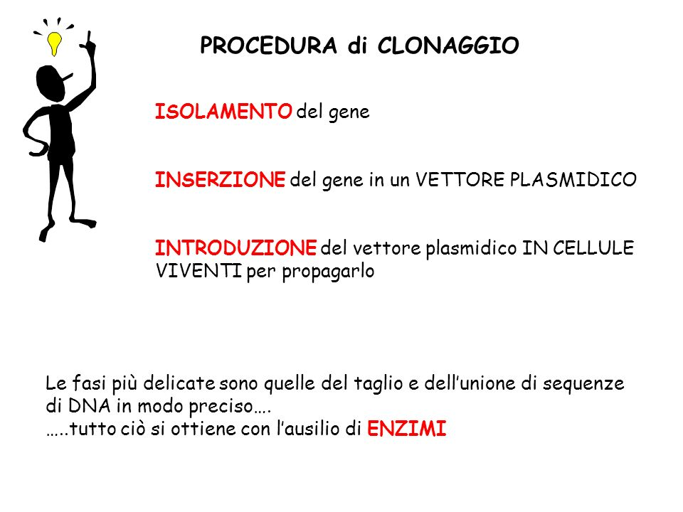 PROCEDURA di CLONAGGIO ISOLAMENTO del gene INSERZIONE del gene in un VETTORE PLASMIDICO INTRODUZIONE del vettore plasmidico IN CELLULE VIVENTI per pro