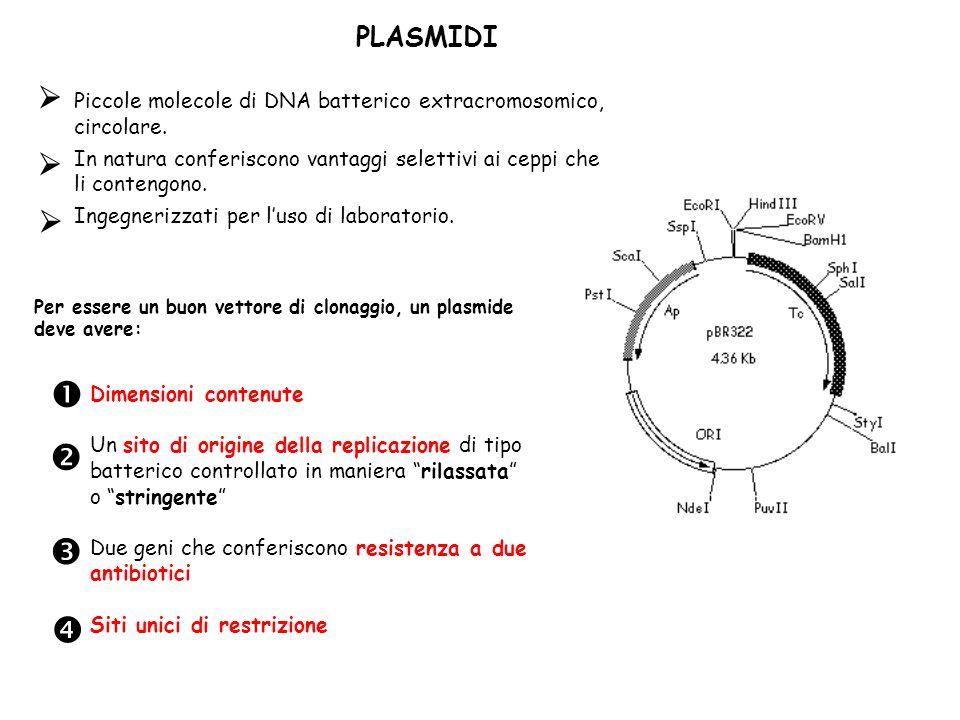 PLASMIDI Per essere un buon vettore di clonaggio, un plasmide deve avere: Dimensioni contenute Un sito di origine della replicazione di tipo batterico