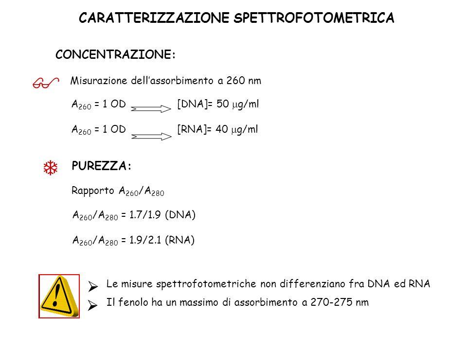 CARATTERIZZAZIONE SPETTROFOTOMETRICA CONCENTRAZIONE: A 260 = 1 OD [DNA]= 50 g/ml [RNA]= 40 g/ml Misurazione dellassorbimento a 260 nm PUREZZA: Rapport