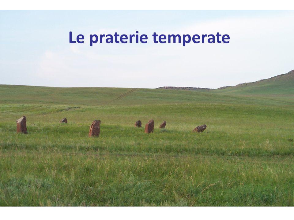 Le praterie temperate