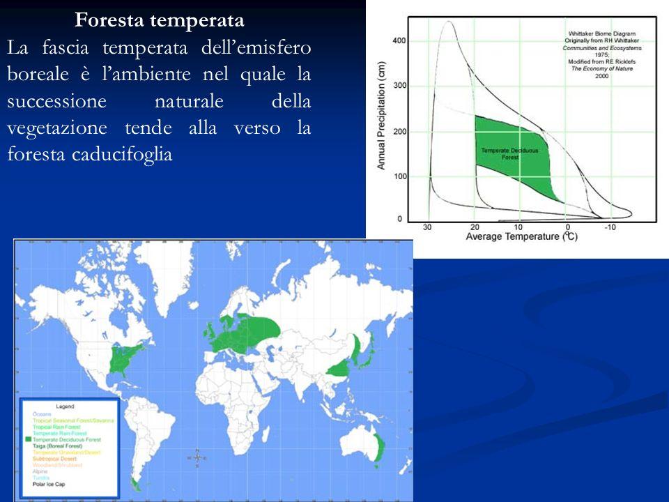 Foresta temperata La fascia temperata dellemisfero boreale è lambiente nel quale la successione naturale della vegetazione tende alla verso la foresta