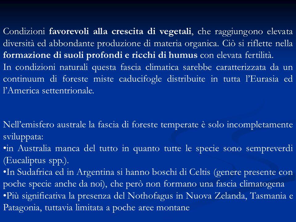 ( Pignatti, 1995) Oggigiorno la foreste temperate sono estremamente frammentate od occupano i rilievi dove luomo non ha esercitato un cambiamento di uso del suolo.
