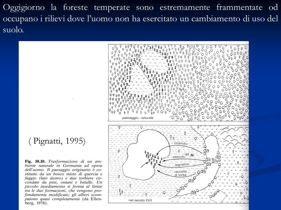 ( Pignatti, 1995) Oggigiorno la foreste temperate sono estremamente frammentate od occupano i rilievi dove luomo non ha esercitato un cambiamento di u