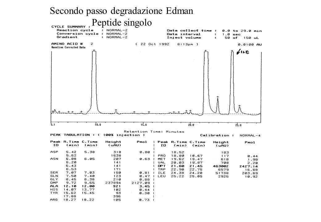 Secondo passo degradazione Edman Peptide singolo