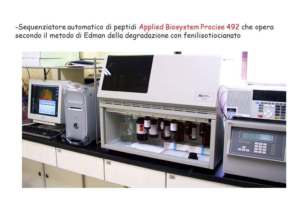 -Sequenziatore automatico di peptidi Applied Biosystem Procise 492 che opera secondo il metodo di Edman della degradazione con fenilisotiocianato