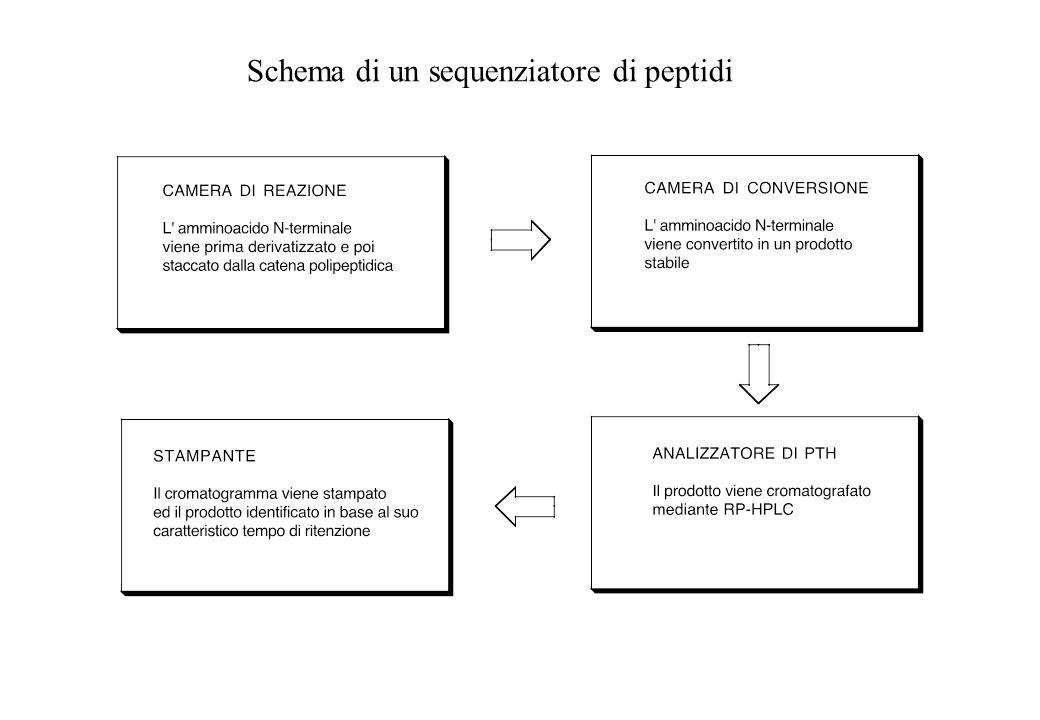 Schema di un sequenziatore di peptidi