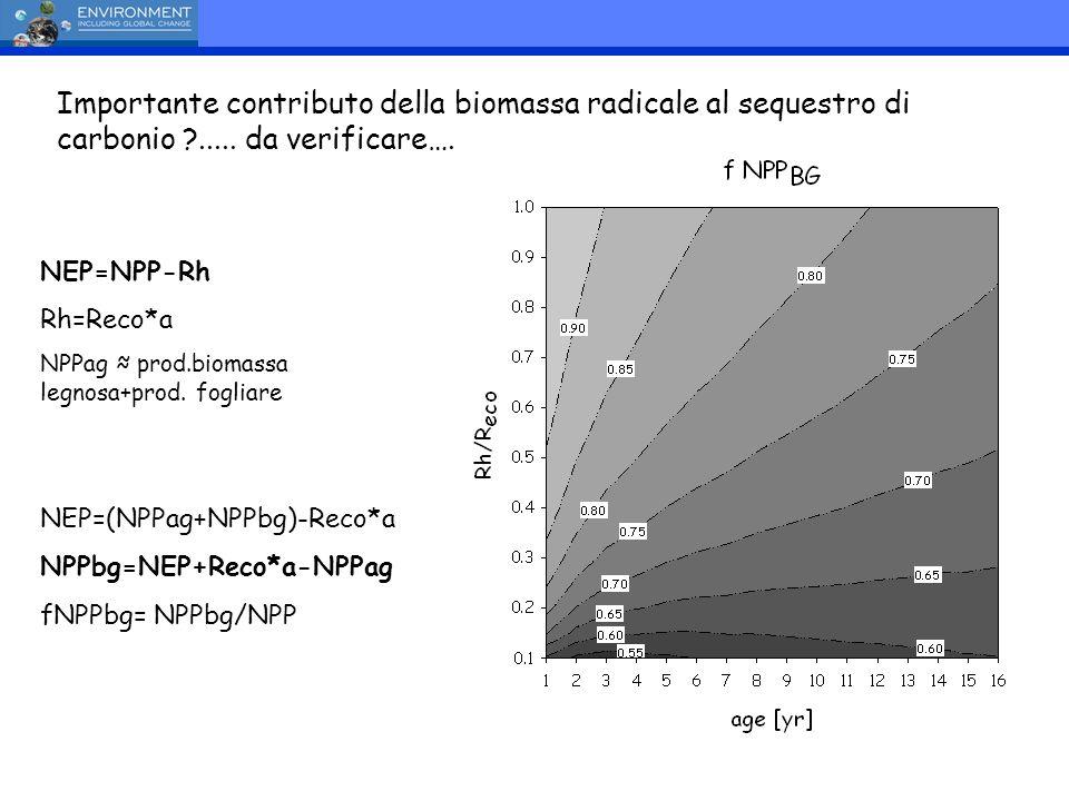 NEP=NPP-Rh Rh=Reco*a NPPag prod.biomassa legnosa+prod. fogliare NEP=(NPPag+NPPbg)-Reco*a NPPbg=NEP+Reco*a-NPPag fNPPbg= NPPbg/NPP Importante contribut