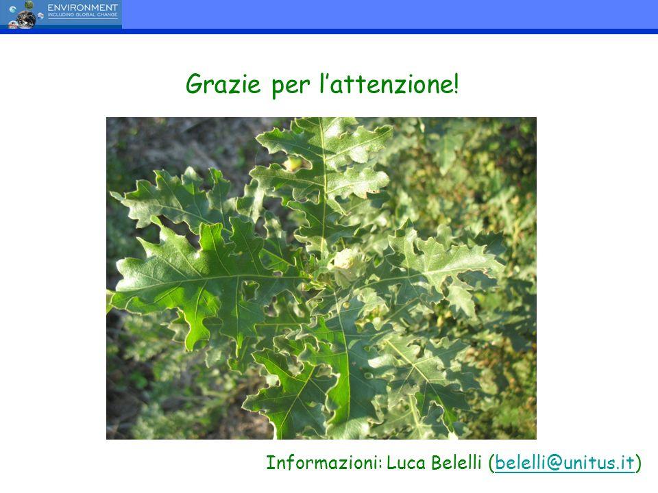 Grazie per lattenzione! Informazioni: Luca Belelli (belelli@unitus.it)belelli@unitus.it