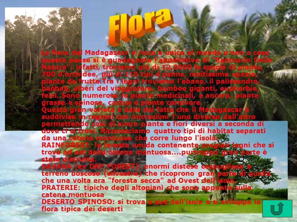 La flora del Madagascar è ricca e unica al mondo e non a caso questo paese si è guadagnato l'appellativo di