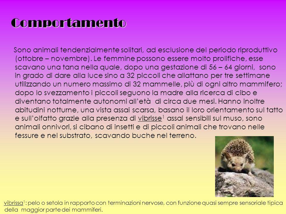 Comportamento Sono animali tendenzialmente solitari, ad esclusione del periodo riproduttivo (ottobre – novembre).