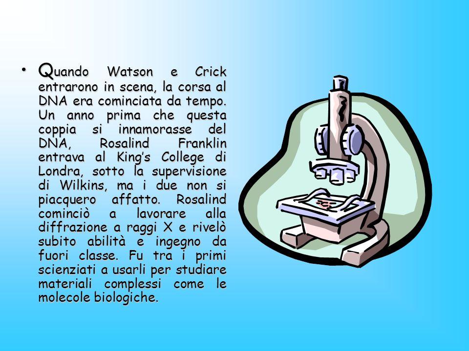Q uando Watson e Crick entrarono in scena, la corsa al DNA era cominciata da tempo. Un anno prima che questa coppia si innamorasse del DNA, Rosalind F