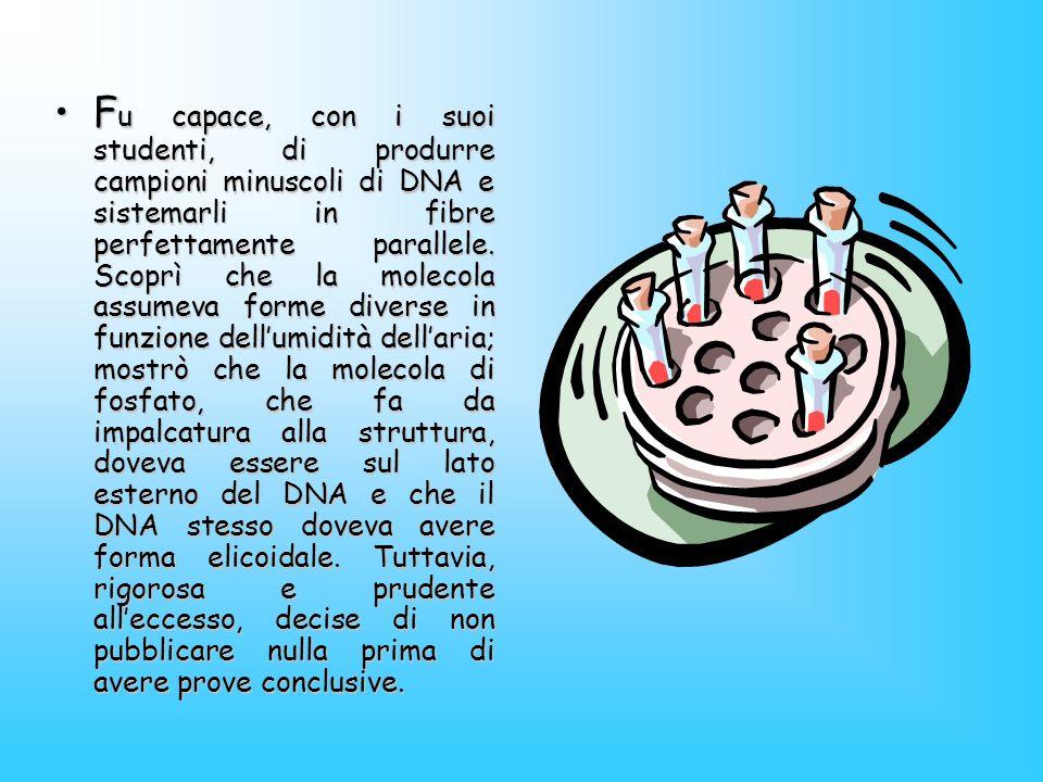 F u capace, con i suoi studenti, di produrre campioni minuscoli di DNA e sistemarli in fibre perfettamente parallele. Scoprì che la molecola assumeva