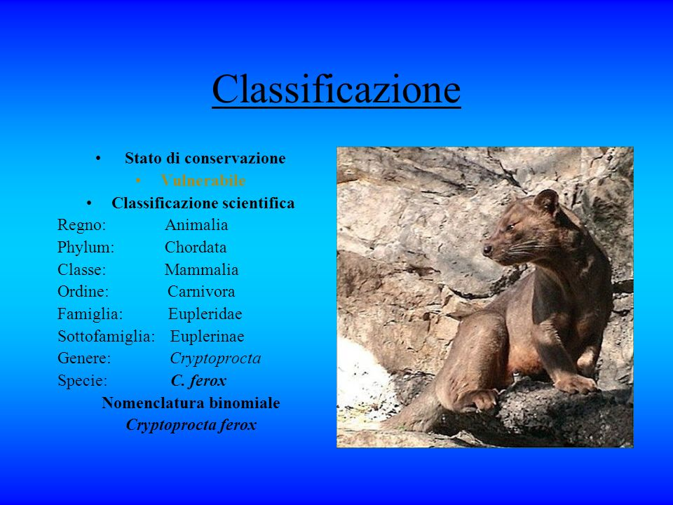 Classificazione Stato di conservazione Vulnerabile Classificazione scientifica Regno: Animalia Phylum: Chordata Classe: Mammalia Ordine: Carnivora Fam