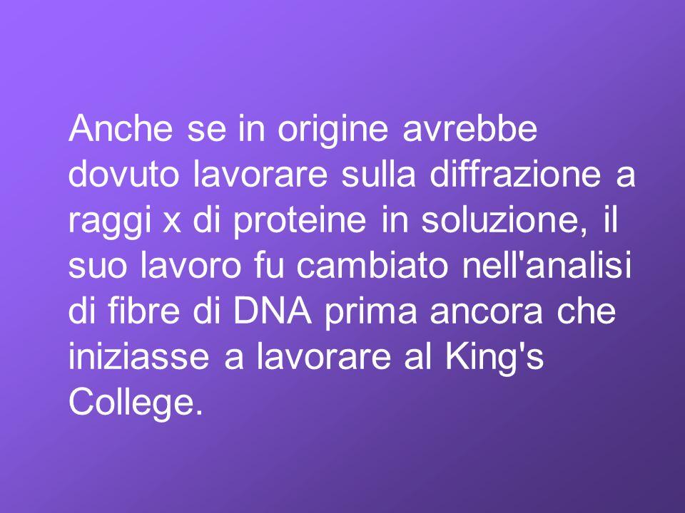Anche se in origine avrebbe dovuto lavorare sulla diffrazione a raggi x di proteine in soluzione, il suo lavoro fu cambiato nell'analisi di fibre di D